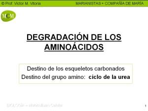 caratula-degradacion-de-aminoacidos