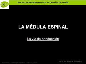 caratula-medula-espinal