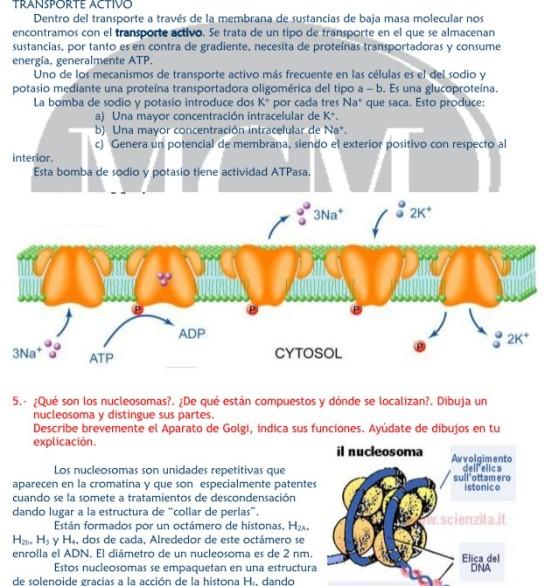 cartula-respuestas-citologia